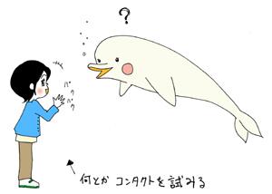 イルカ.jpg