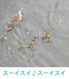 鴨1.jpg